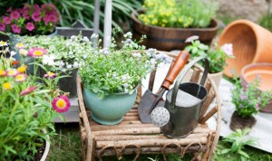 tuinieren voorjaar